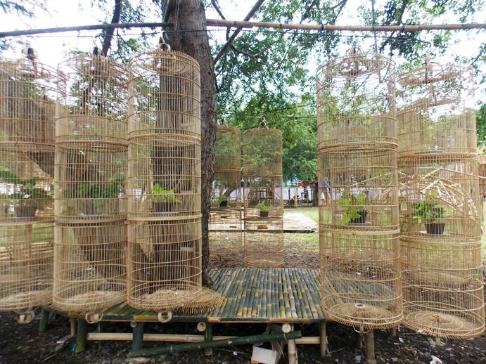 bamboobelianne-2