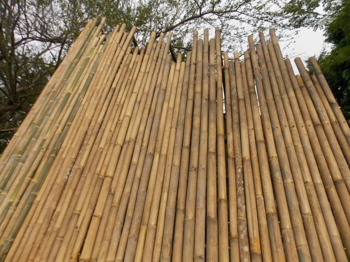 bamboobelianne-20