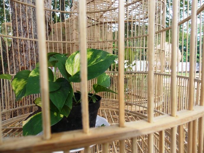 bamboobelianne-34